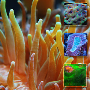 Click for Reef Blog