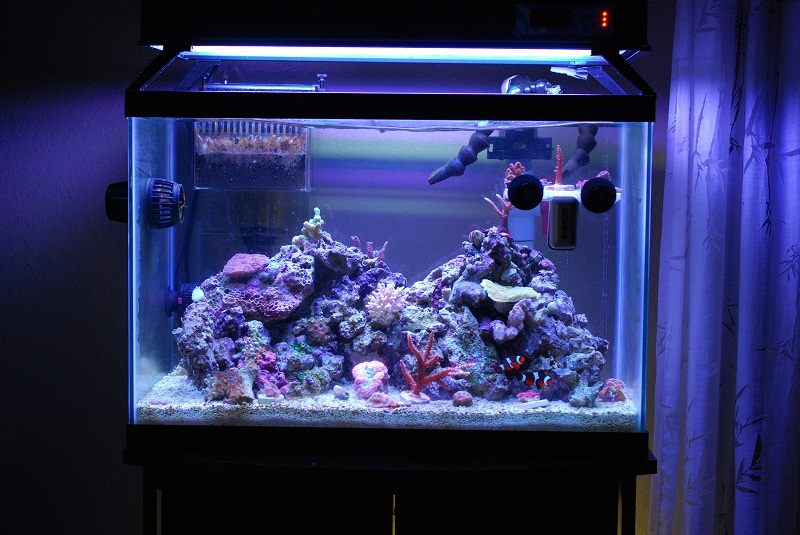 ... And Put Everything Else On The Sand To Make It Easy To Bag Up And Move  (there Must Be 25 Corals On The Rack And Sand And Only A Few On Rock)